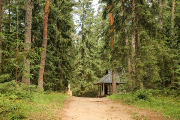 Il bosco russo